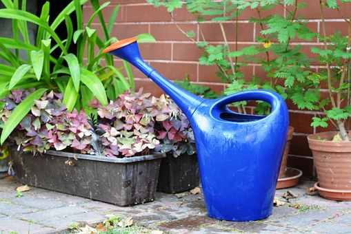 arrosage plantes0.jpg